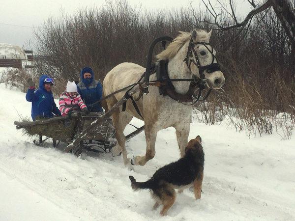 Экскурсия по Самарской Луке на конных санях!