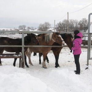 Экскурсия по конюшне Клуба «Степное Поле», Самарская Лука